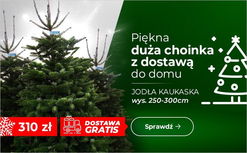 JODŁA KAUKASKA 250 - 300 cm
